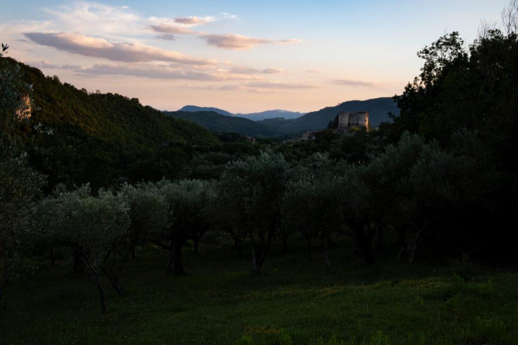 Il Castello e gli ulivi - foto di Daniele Palladino