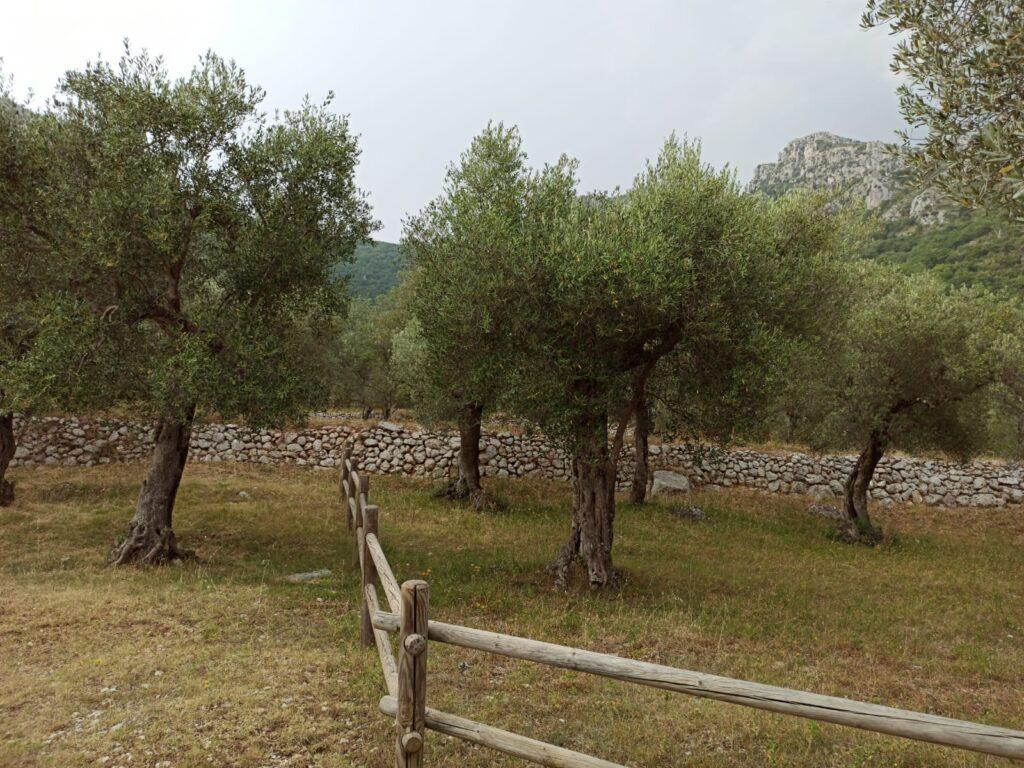 Parco Regionale dell'olivo con muretti a secco